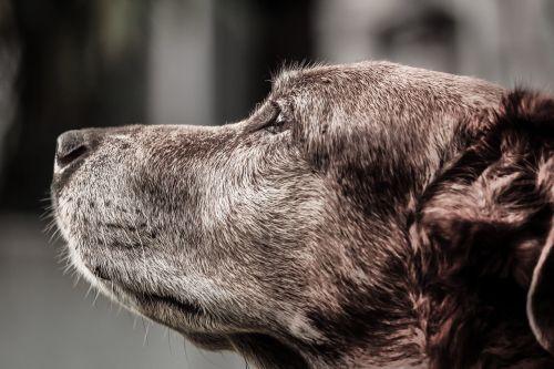 dog hybrid crete