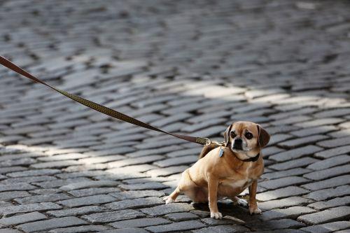 dog pet leash
