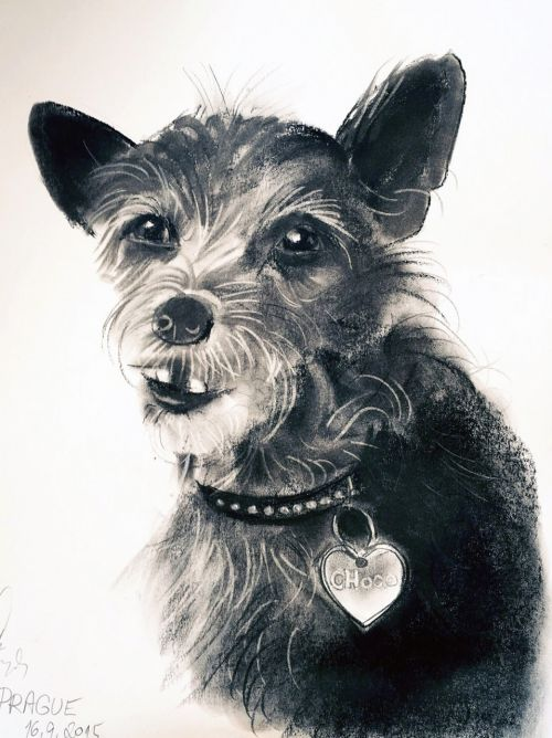 dog drawing animal