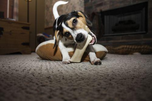 dog bone pet