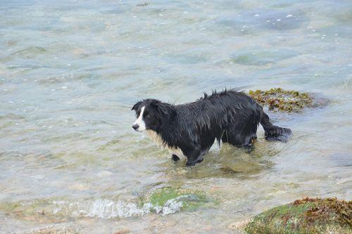 dog animal nature
