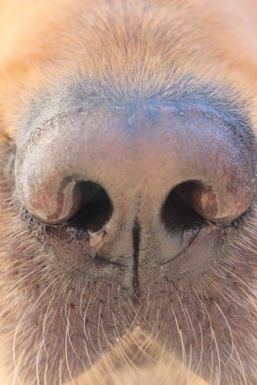 dog nose dog nose