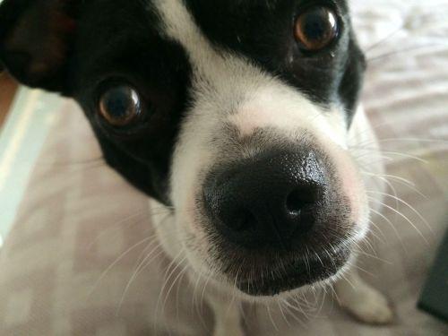dog rescue pet