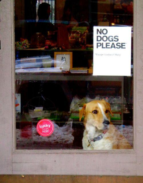 dog funny sign