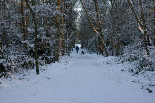 šuo, vaikščioti, sniegas, savininkas, vakaras, ledinis, vaikščioti, kaimas, juostos, kelias, kelias, vyras, naminis gyvūnėlis, pratimas, šaltas, žiema, medžiai, miškai, kompanionas, snieguotas, šuo & amp, snieguotas vaikščioti savininkas