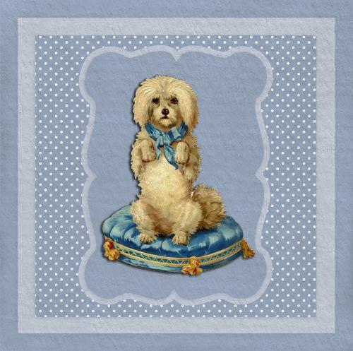 Dog Begging Blue Cushion