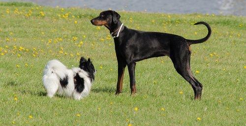 dog dogs pet  animal  black