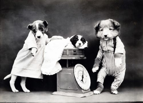Dog Dressed Vintage Photo