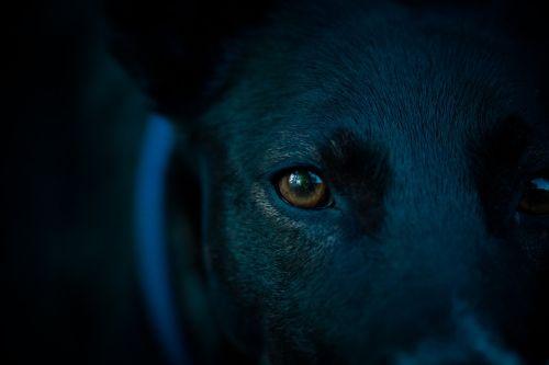 dog head eye pupil