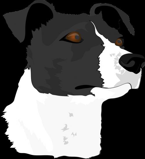 dog head dog terrier