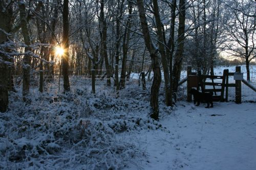 Dog On Snowy Evening Walk