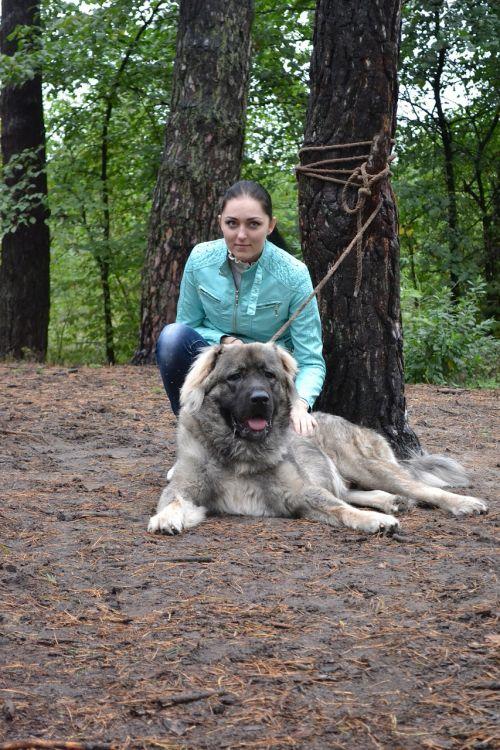 dog owner dog training