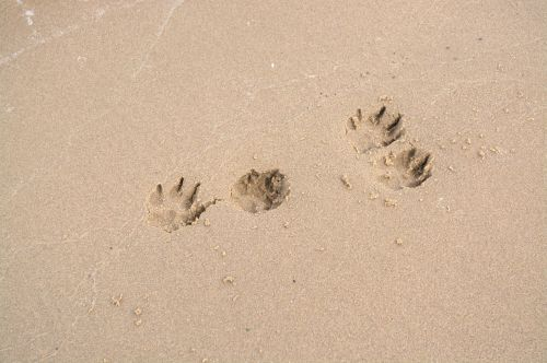 dog paw traces paw print