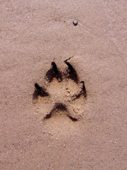 dog paw footprint paw print