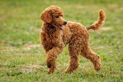 dog playing dog pet