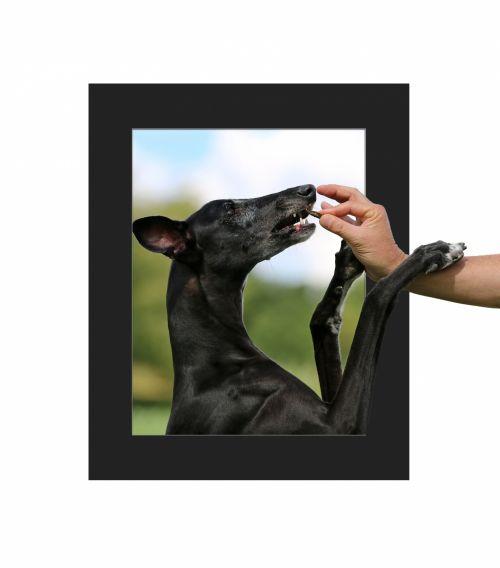 Dog Receiving Treat