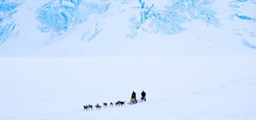 dog sled dogs snow