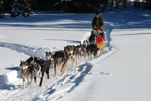 dog sled continental divide winter vacation