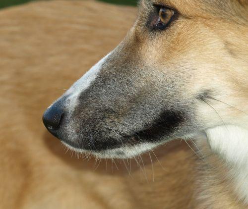 dog snout nose snout