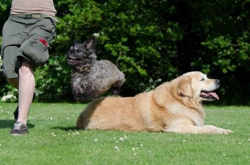 dog trick tricks dog show trick