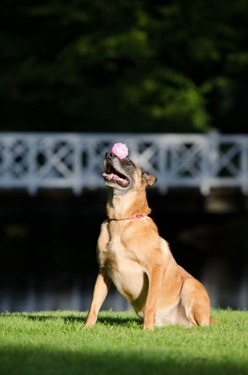 dog trick balance ball on snout