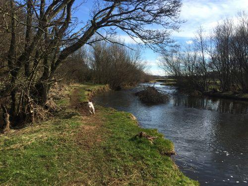 Dog Walking In Cumbria