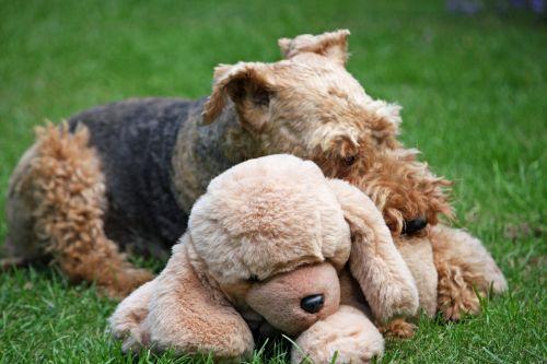 Dog With Plush Toy