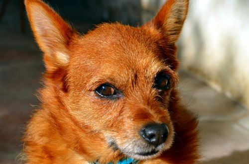 doggie dog look