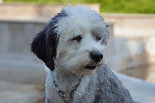 doggy  summer  animal