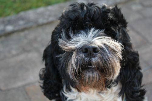 doggy puppy beauty