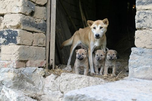dogs family puppies