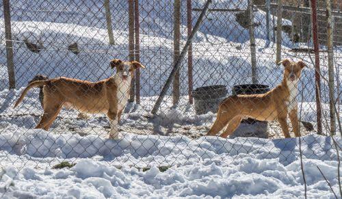 dogs snow winter