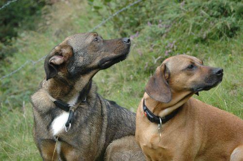 dogs pets hybrids