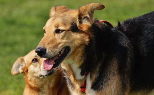 dogs fur animal