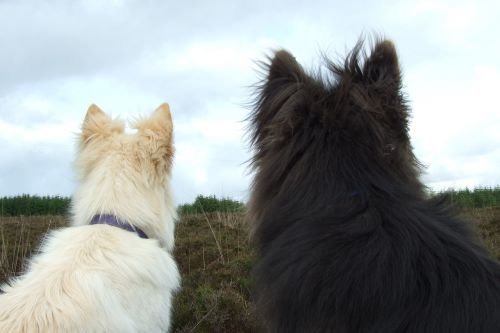 dogs white fur black fur