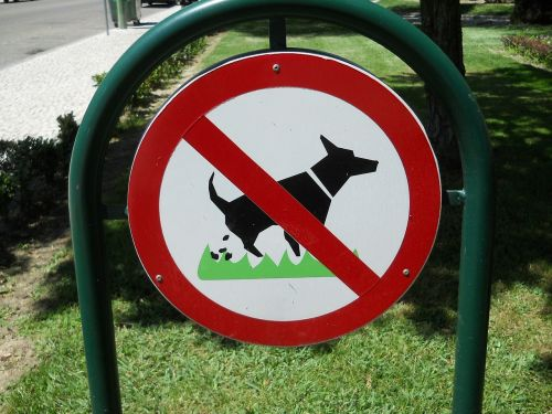 dogs animal behavior
