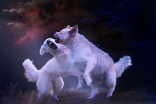 dogs  bitch  brawl