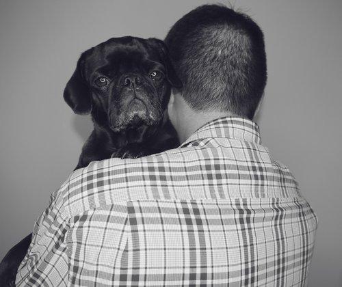 dogs  pug  black pug