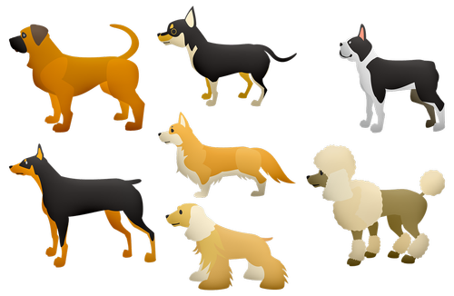 dogs  poodle  large dogs