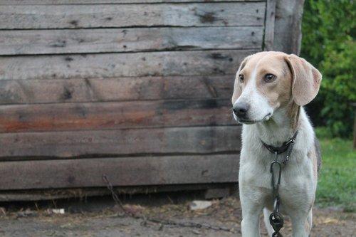 dogs  dog  sorrow