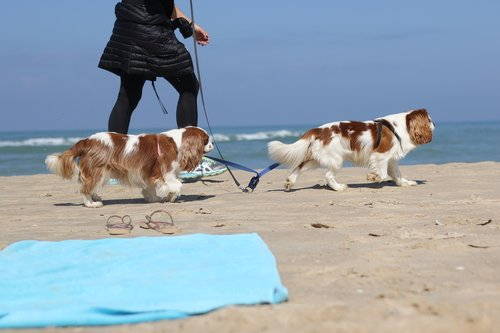 dogs  breed  sea