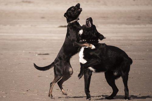 dogs  animals  dog