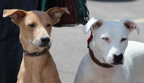 dogs hundeportrait on leash