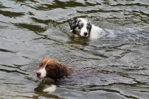 dogs dog in the water swim