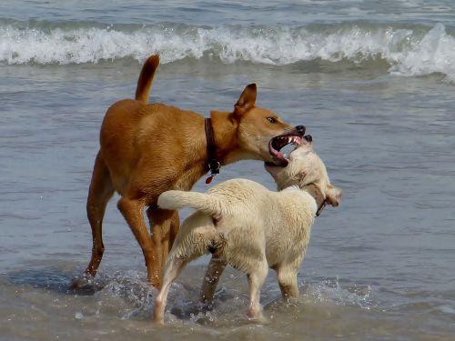 dogs beach play
