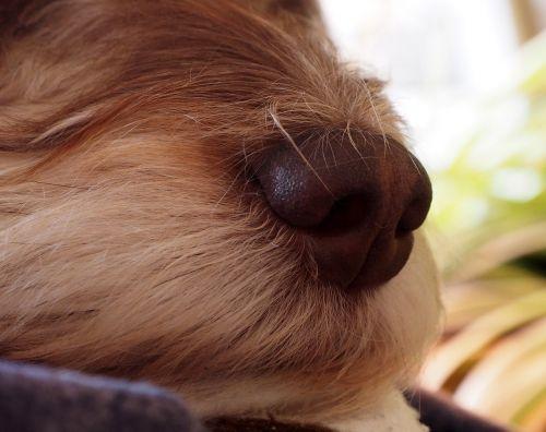 dog's nose nose dog