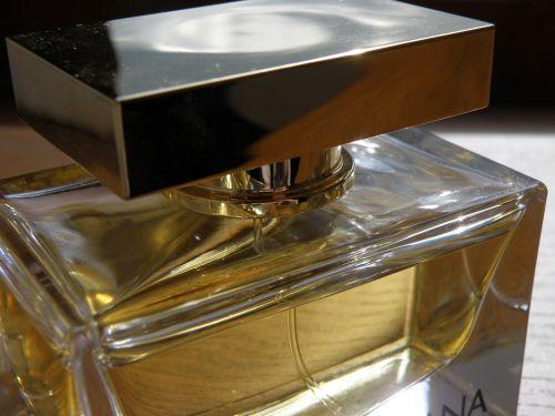 dolce gabbana perfume