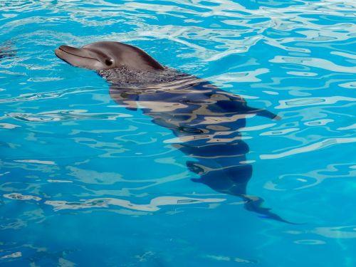 dolphin dolphinarium marine animal