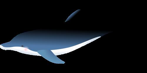 dolphin sea fish