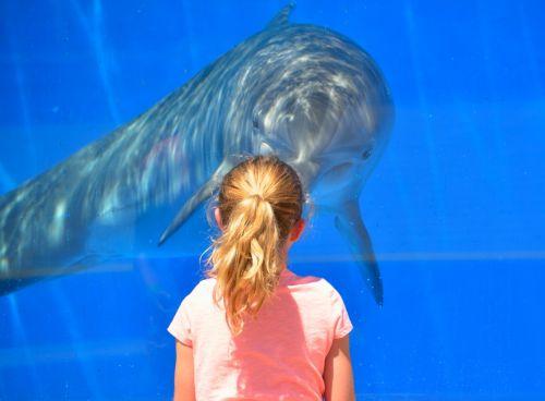 dolphin child children